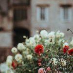 geveltuin planten keuze